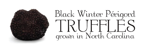 black-winter-truffle