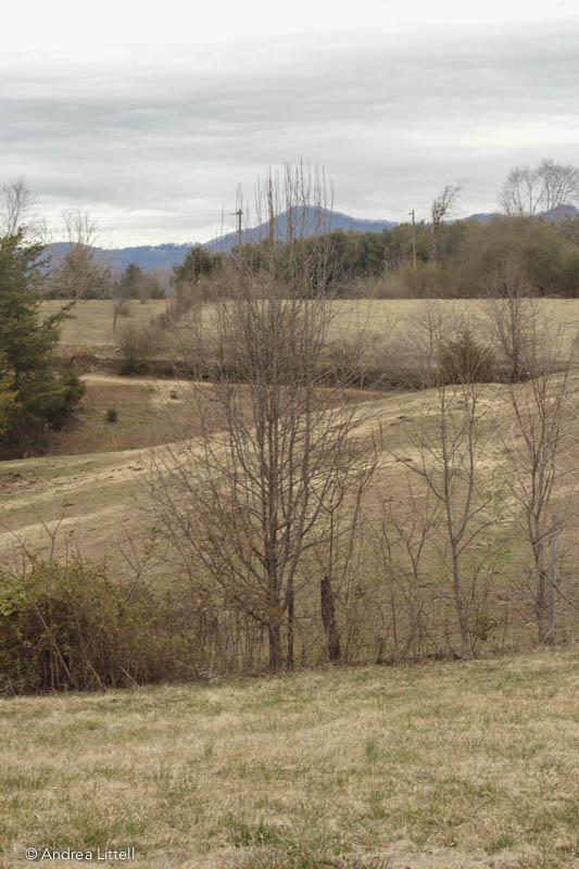 Flora Ridge-1