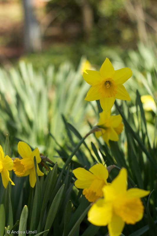 Spring Flowers-1-5