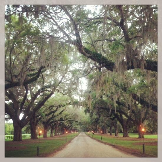 Charleston_BooneHall